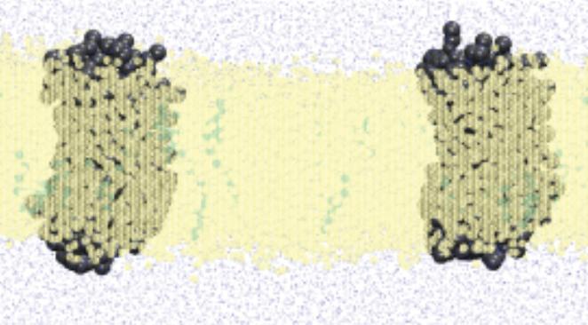 A Comprehensive Description of the Homo and Heterodimerization Mechanism of the Chemokine Receptors CCR5 and CXCR4